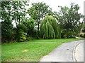 SE3736 : Scholes Elmet Nursery entrance, Morwick Grove by Christine Johnstone