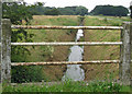 TA1323 : Land Drain near Lynton Stud by David Wright