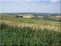 ST9120 : Scrubby land adjoining B3081 lay-by on Charlton Down by David Gearing