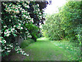 SJ7661 : Open space behind the Parkhouse estate by Stephen Craven