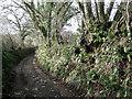 SX8353 : Ferns in a hedgebank east of Capton by Robin Stott
