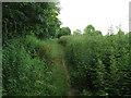 SJ7661 : Nettles alongside the Sandbach Bypass by Stephen Craven