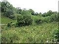 H0764 : A damp meadow by Richard Webb
