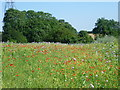 TQ7560 : Wild flowers near the North Downs Way by Marathon