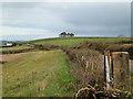 SX8553 : Hilltop clump east of Foxenholes by Robin Stott