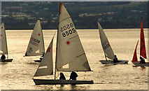 J3979 : Dinghies, Holywood by Albert Bridge