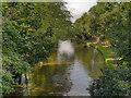 SJ6486 : The Bridgewater Canal, Grappenhall by David Dixon