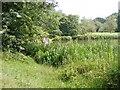 SO8992 : Baggeridge Pond Dip by Gordon Griffiths