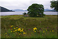 NN0560 : Loch Linnhe, North Ballachulish by Ian Taylor