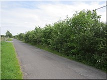 G5219 : A high hedge by Richard Webb