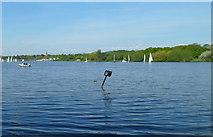 TQ2187 : Brent Reservoir, London by Jaggery