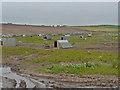 NO5804 : Pig farm east of Cellardyke by John Allan