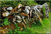 M2300 : The Burren - R480 - Stone Wall & Shrubbery near Poulnabrone Dolmen Site by Joseph Mischyshyn
