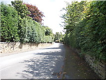 SE2425 : Timothy Lane - viewed from Heaton Road by Betty Longbottom