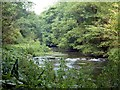 SK1072 : The River Wye in Wye Dale by Graham Hogg