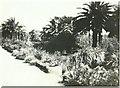 SV8914 : Tresco Abbey Gardens in 1943 by George Baker