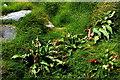 R0597 : Doolin - R479 - Harbour - Rocks, Grass, & Leafy Plants by Joseph Mischyshyn