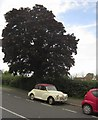 SX9065 : Morris Minor Convertible, Torquay by Derek Harper