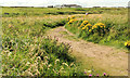 C9342 : Path, Portballintrae (1) by Albert Bridge