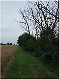 TL2243 : Hedgerow east of Biggleswade by JThomas