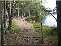 NH9718 : Loch Garten by Jennifer Jones