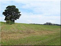 SE2648 : Fields near Banks Farm by Chris Heaton