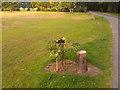 SK4833 : Vandalised oak tree by David Lally