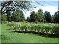 TQ2668 : Rose Garden - Morden Hall Park by Paul Gillett