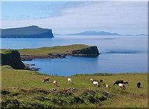 NG2261 : Cattle at Trumpan by Gordon Hatton