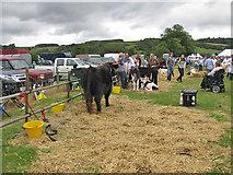 SE7296 : Cattle exhibits, Rosedale Show, 2012 by Pauline E