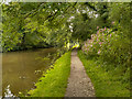 SD6022 : Leeds and Liverpool Canal,Miller Wood by David Dixon