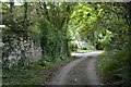 SW5533 : Lower Porthcollum by Elizabeth Scott