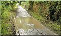 J4877 : Muddy path, Clandeboye Wood near Bangor by Albert Bridge