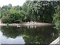 TQ3204 : Ducks by Queens Park Pond by Paul Gillett