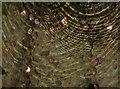 SX7962 : Coins in the fountain, Dartington by Derek Harper