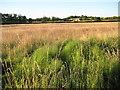 SO8843 : Dunstall Farm by Philip Halling