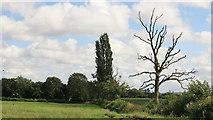 SJ5334 : Looking across the fields nr Coton farm by roger geach
