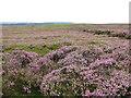 SE7193 : View west over Spaunton Moor by Pauline E