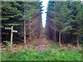 SU8516 : Avenue through conifers, Newfarm Plantation by Robin Webster