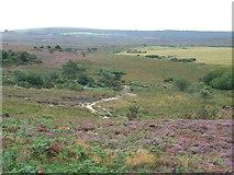 SZ0284 : Godlingston Heath, Studland by Malc McDonald