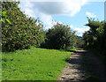 ST5860 : 2012 : Corner of an orchard near Bishop Sutton by Maurice Pullin