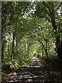 SY2197 : Road to Watchcombe by Derek Harper