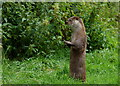 TQ3643 : Bolder Otter by Peter Trimming