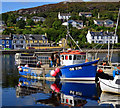 NR8668 : Fiona-Me in Tarbert by The Carlisle Kid