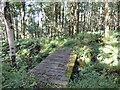 NS2901 : Barony Hill Trail in Falfarrocher Glen by Billy McCrorie