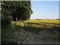TL5756 : Footpath along tree line by Hugh Venables