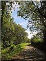 SY2197 : Yardbury Hill Road by Derek Harper