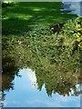 SD4861 : Lancaster - Ashton Memorial reflection (I) by Rob Farrow