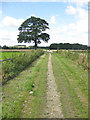 SE6675 : Ebor Way footpath by Pauline E
