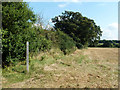 TQ1761 : Bridleway behind the hedge by Robin Webster